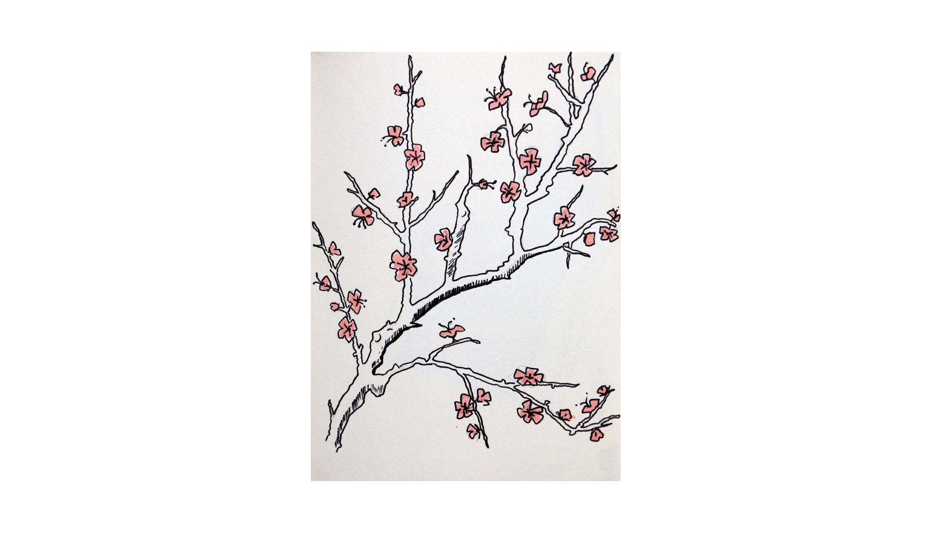 cerisier_sketch